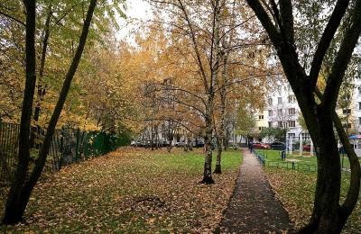 Этой осенью больше всего столичных дворов озеленили в Южном округе