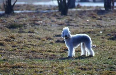 Собака в Южном округе Москвы