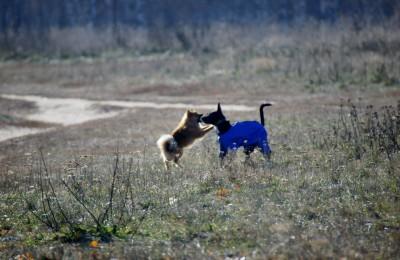 Выгуливать собак можно на специальных площадках
