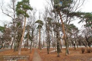 """Парк """"Сосенки"""" в районе Царицино"""