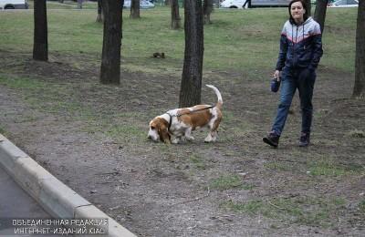 Бесплатную вакцинацию домашних животных против бешенства проведут в апреле