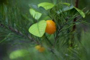 Обзорную экскурсию «Цитрусовый фреш» проведут в Оранжерейном комплексе музея-заповедника «Царицыно»