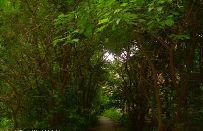 """В Царицыне пройдет акция по озеленению """"Миллион деревьев"""""""