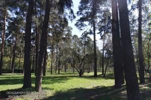 Народный парк «Сосенки» в районе Царицыно