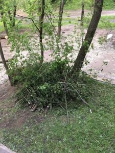 Городские службы убрали упавшее дерево после жалобы