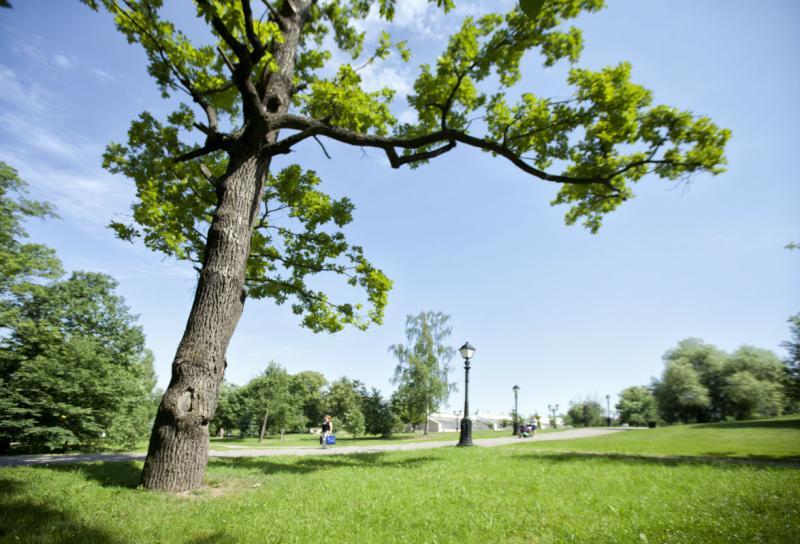 Экскурсия, посвященная уникальным деревьям, пройдет в Царицынском парке