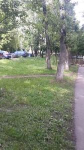 Городские службы убрали упавшее дерево на улице Бехтерева