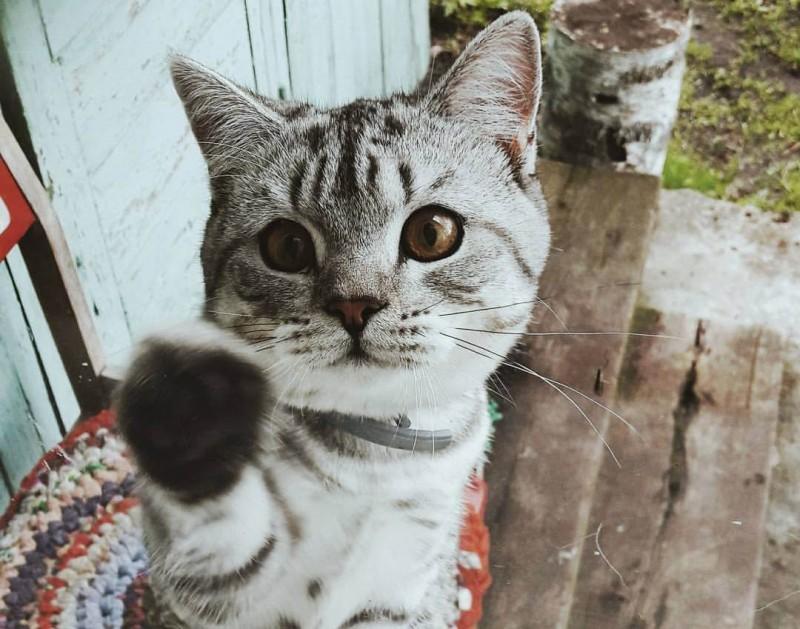"""В """"Изумрудном городе"""" отпраздновали День кошек"""