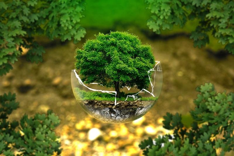 «Активный гражданин», акция «Миллион деревьев», голосование, опрос, озеленение