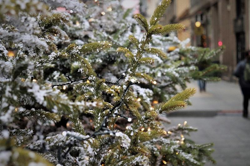 управа, елочный базар, ель, Новый год, пихта, сосна
