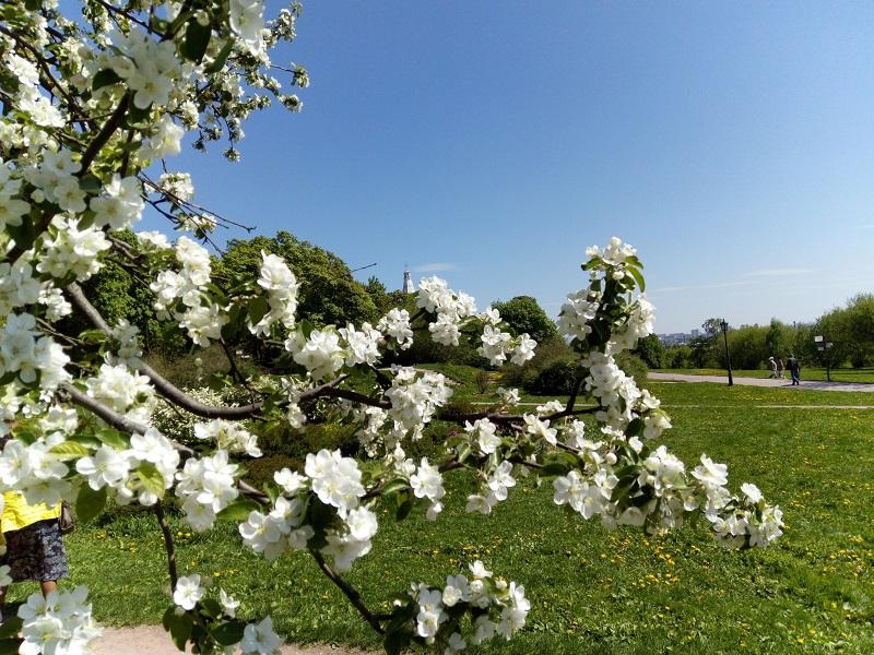 Более трех тысяч кустарников и 28 деревьев появятся этой весной в Царицыно